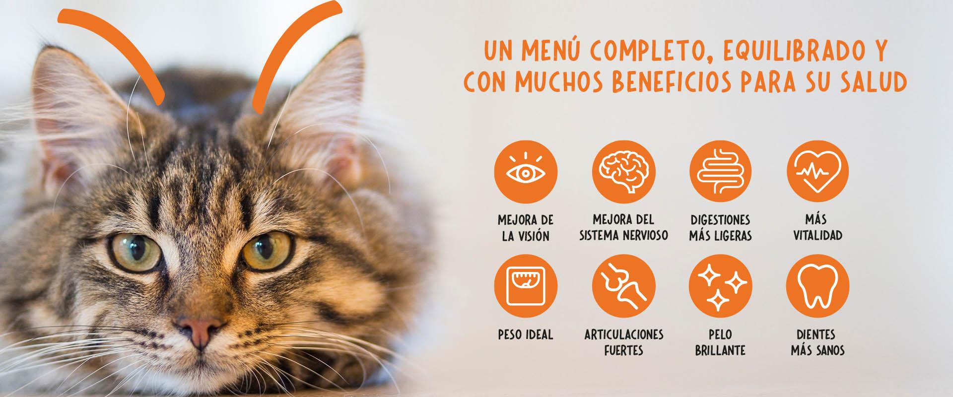 Tienda de gatos_banner 2_v2