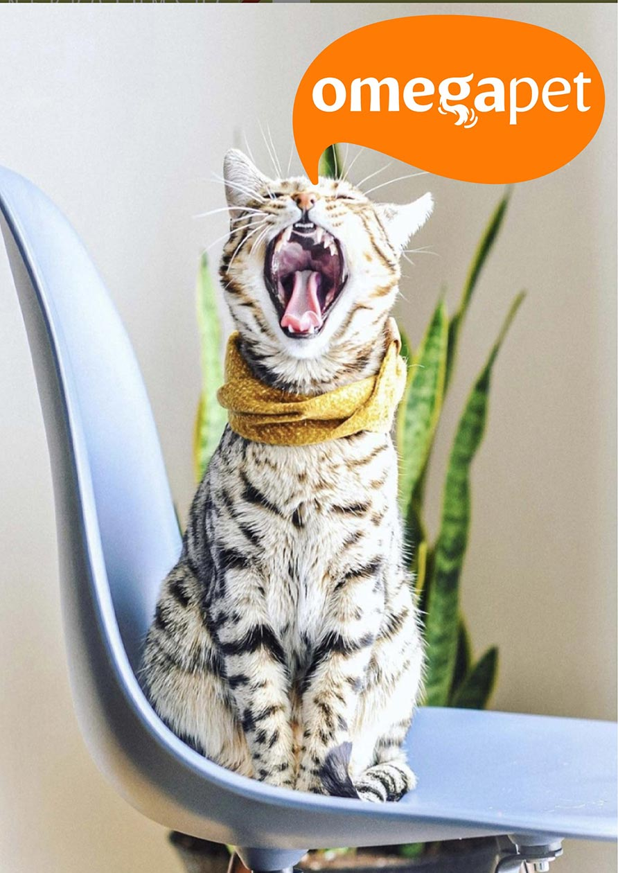 comida barf para gatos