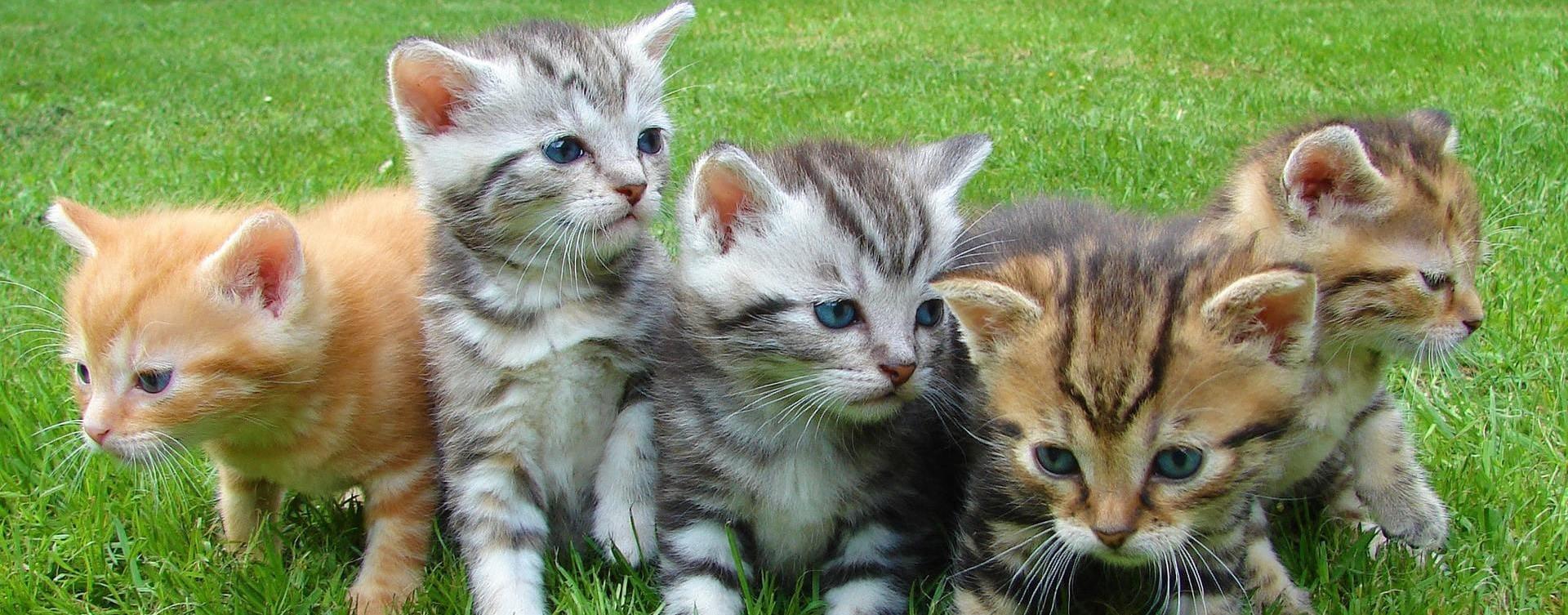 Comprar comida BARF para gatos